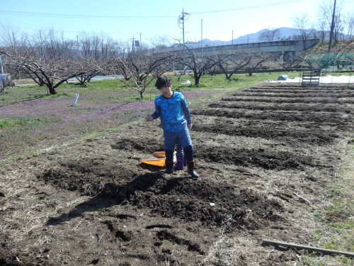 ジャガイモを植えました_f0325525_17452745.png
