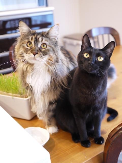 猫のお留守番 天ちゃん麦くん茶くん〇くんAoiちゃん編。_a0143140_20261325.jpg
