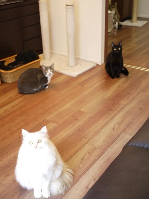 猫のお留守番 天ちゃん麦くん茶くん〇くんAoiちゃん編。_a0143140_20292738.jpg