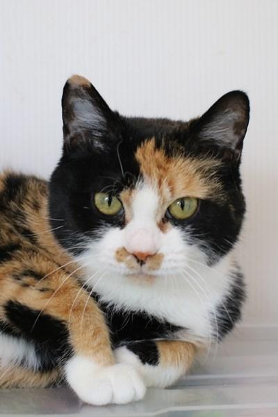 里親さま募集中の保護猫さん_e0151545_21005080.jpg