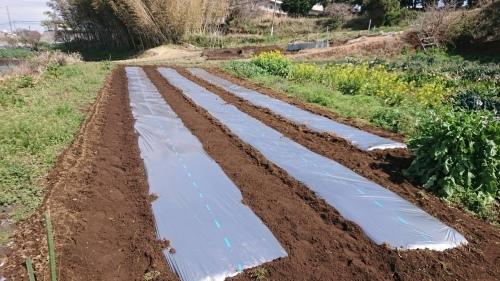 さあ じゃが芋の畝作りです 続いて 蚕豆 エンドウ豆の防鳥ネット張り始めます_c0222448_12594693.jpg