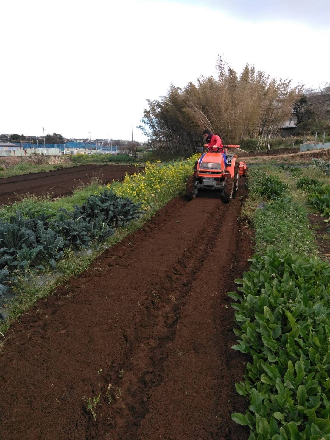 さあ じゃが芋の畝作りです 続いて 蚕豆 エンドウ豆の防鳥ネット張り始めます_c0222448_13003227.jpg