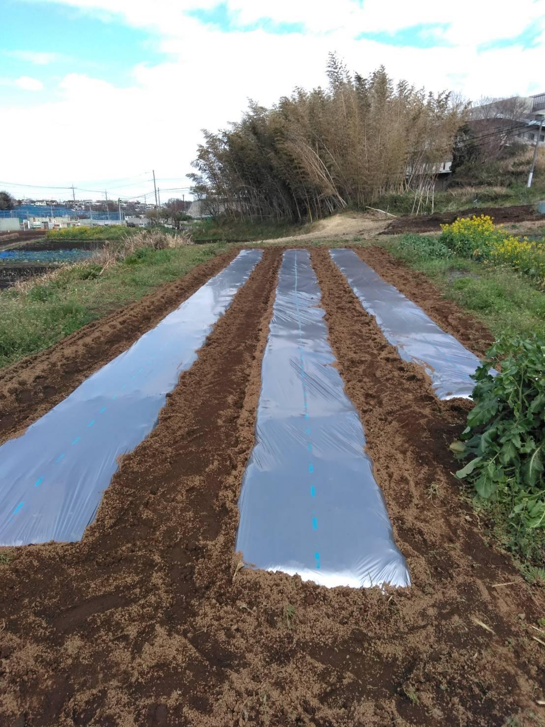 さあ じゃが芋の畝作りです 続いて 蚕豆 エンドウ豆の防鳥ネット張り始めます_c0222448_13011154.jpg