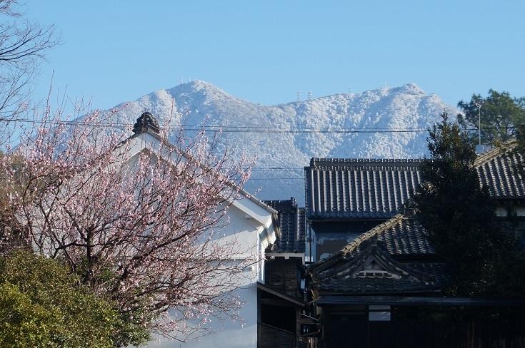 雪の筑波山とあんずの花_b0124462_09221498.jpg
