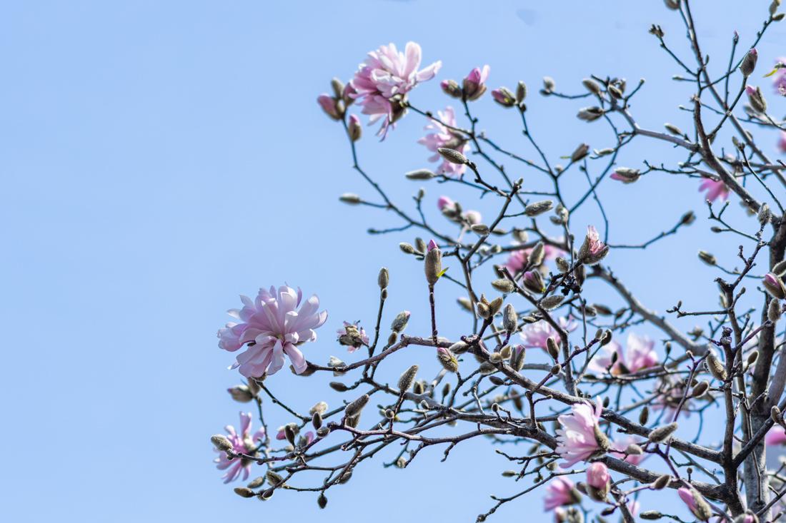 ピンクの花_a0261169_12055195.jpg