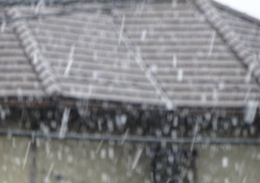 雪の桜開花宣言_f0059673_22331771.jpg