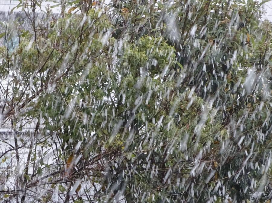 雪の桜開花宣言_f0059673_22332671.jpg