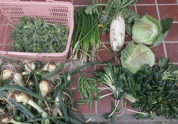 (初)お豆ご飯&ジャガイモの発芽_f0018078_18264010.jpg