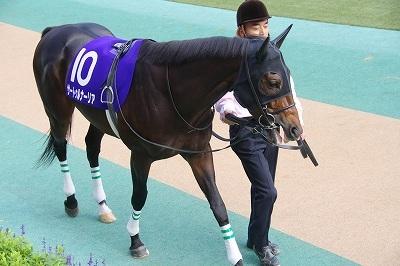 金鯱賞は昨年の最優秀3歳牡馬サートゥルナーリアが貫禄勝ち、重賞4勝目を飾る_b0015386_21101534.jpg