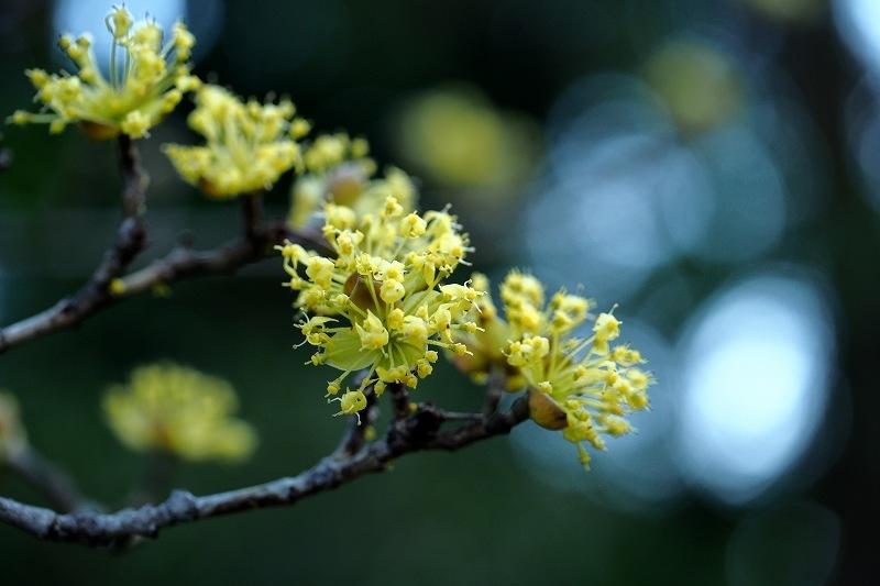 再び向島百花園のお花たち_e0348392_20455451.jpg