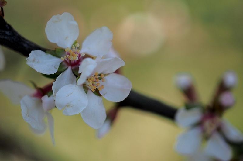 再び向島百花園のお花たち_e0348392_20460168.jpg