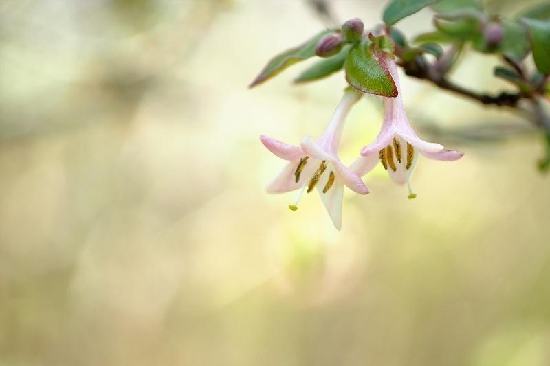 再び向島百花園のお花たち_e0348392_20461218.jpg