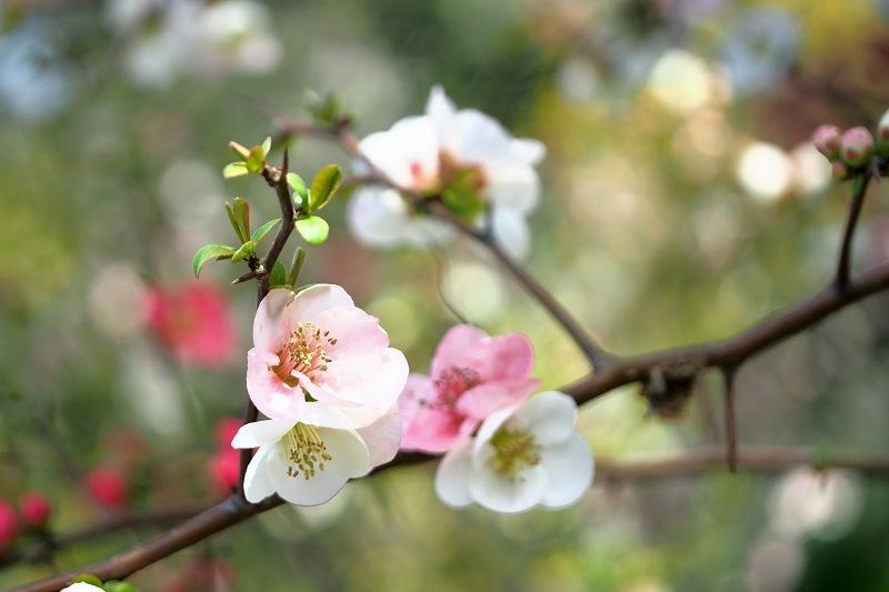 再び向島百花園のお花たち_e0348392_20462723.jpg