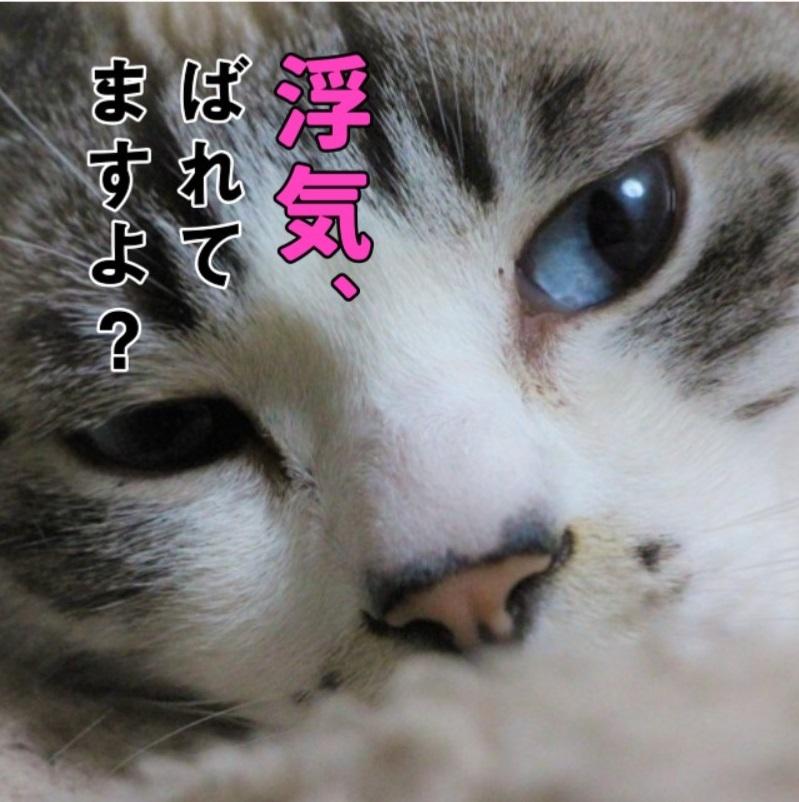 ノンストップばばバカ_a0333195_15333664.jpg