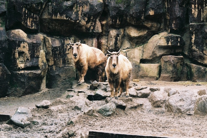 3/2 多摩動物公園② 3枚_b0016600_23154271.jpg