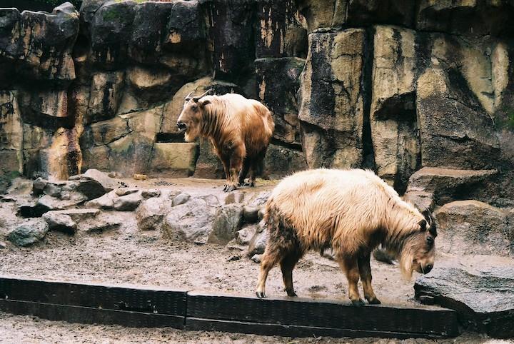 3/2 多摩動物公園② 3枚_b0016600_23154941.jpg