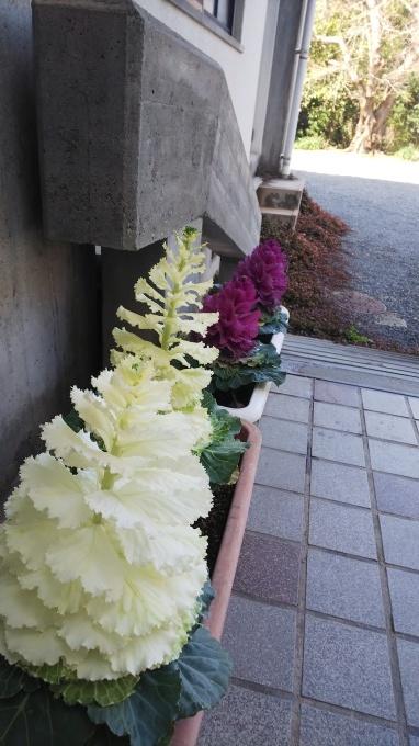 春うらら   14_b0239402_20335247.jpg