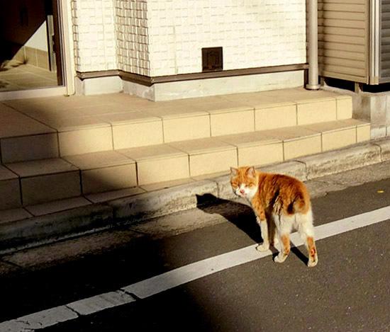 かわいいノラ猫ちゃん_b0255303_10535503.jpg
