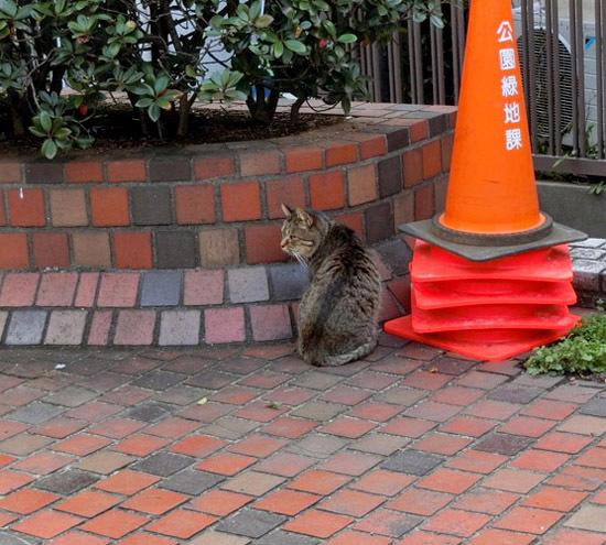 かわいいノラ猫ちゃん_b0255303_10542251.jpg