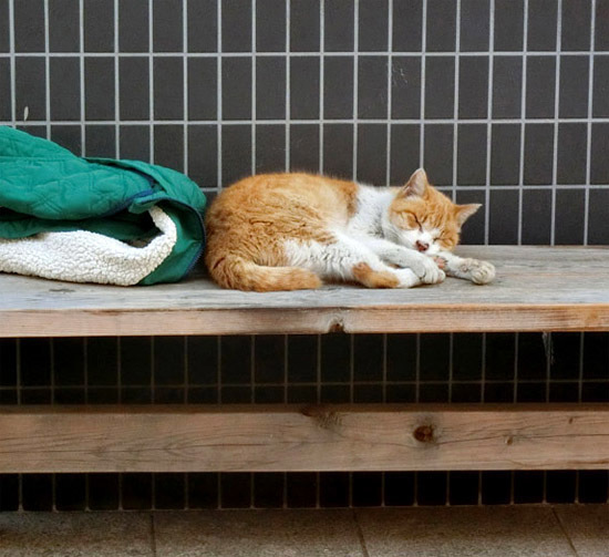 かわいいノラ猫ちゃん_b0255303_10543748.jpg
