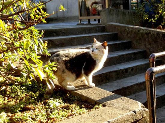 かわいいノラ猫ちゃん_b0255303_10553783.jpg