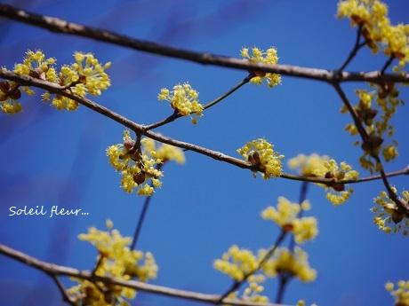 小さな春を見つけて_c0098807_15391693.jpg