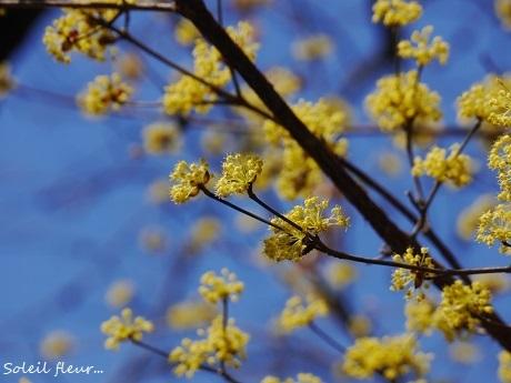 小さな春を見つけて_c0098807_15455122.jpg