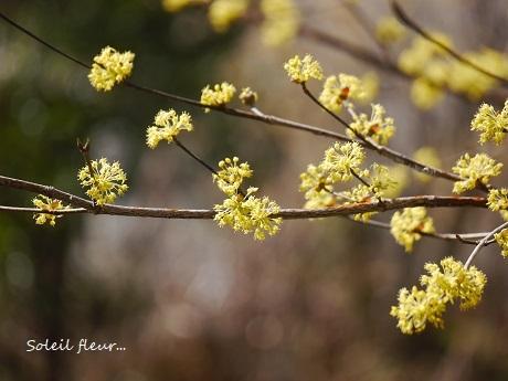 小さな春を見つけて_c0098807_15460887.jpg