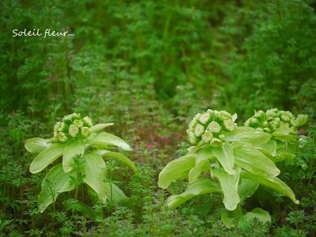 小さな春を見つけて_c0098807_15534567.jpg
