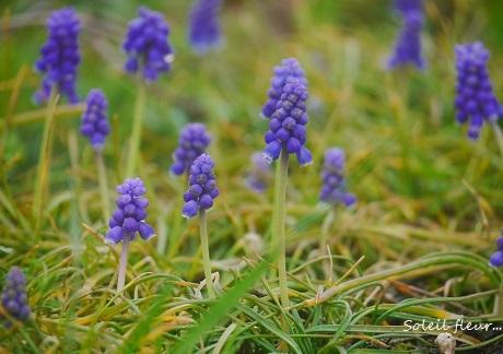 小さな春を見つけて_c0098807_15541482.jpg