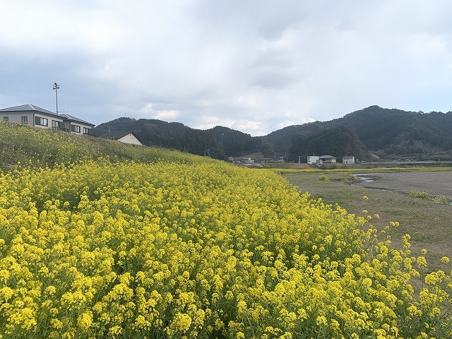 菜の花めぐり♪_d0177220_14115118.jpg