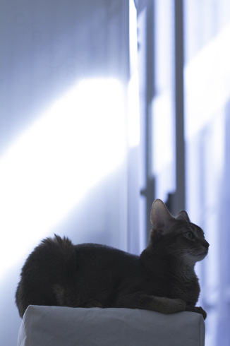 [猫的]後光_e0090124_22184260.jpg
