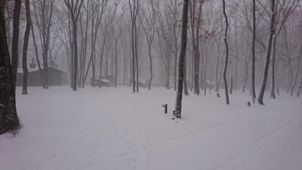 またまた雪が降りました!スタッドレスタイヤ必須(2020年3月16日)_b0174425_13431712.jpg
