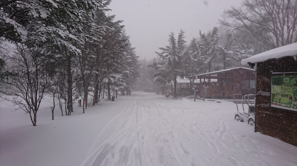 またまた雪が降りました!スタッドレスタイヤ必須(2020年3月16日)_b0174425_13432345.jpg