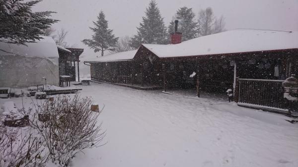 またまた雪が降りました!スタッドレスタイヤ必須(2020年3月16日)_b0174425_13433359.jpg