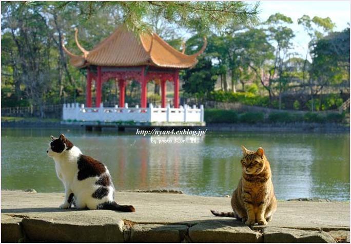 池猫_f0166234_15312366.jpg