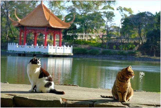 池猫_f0166234_15315757.jpg