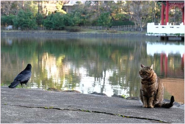 池猫_f0166234_15361859.jpg