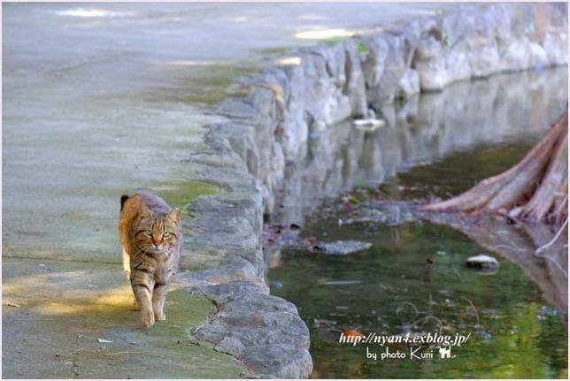 池猫_f0166234_15391756.jpg