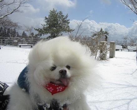 六甲山に雪が降ったよ~♪(1)_b0177436_21171239.jpg