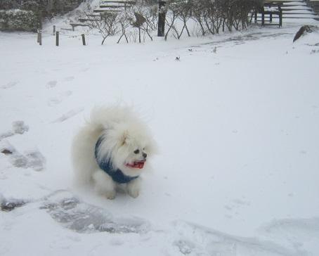 六甲山に雪が降ったよ~♪(1)_b0177436_21253226.jpg