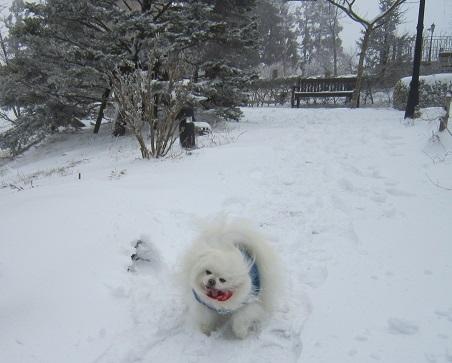 六甲山に雪が降ったよ~♪(1)_b0177436_21270213.jpg