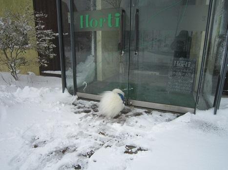 六甲山に雪が降ったよ~♪(1)_b0177436_21280704.jpg