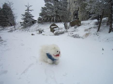 六甲山に雪が降ったよ~♪(1)_b0177436_21322000.jpg