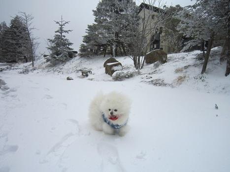 六甲山に雪が降ったよ~♪(1)_b0177436_21332472.jpg