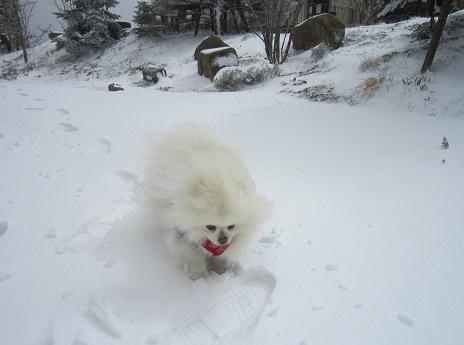 六甲山に雪が降ったよ~♪(1)_b0177436_21335888.jpg