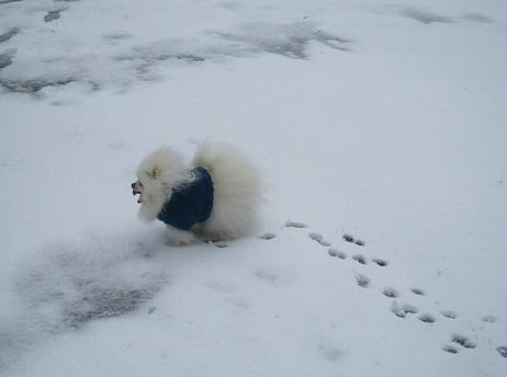 六甲山に雪が降ったよ~♪(1)_b0177436_21401629.jpg