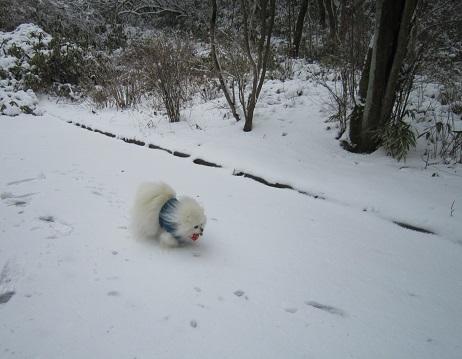 六甲山に雪が降ったよ~♪(1)_b0177436_21415606.jpg
