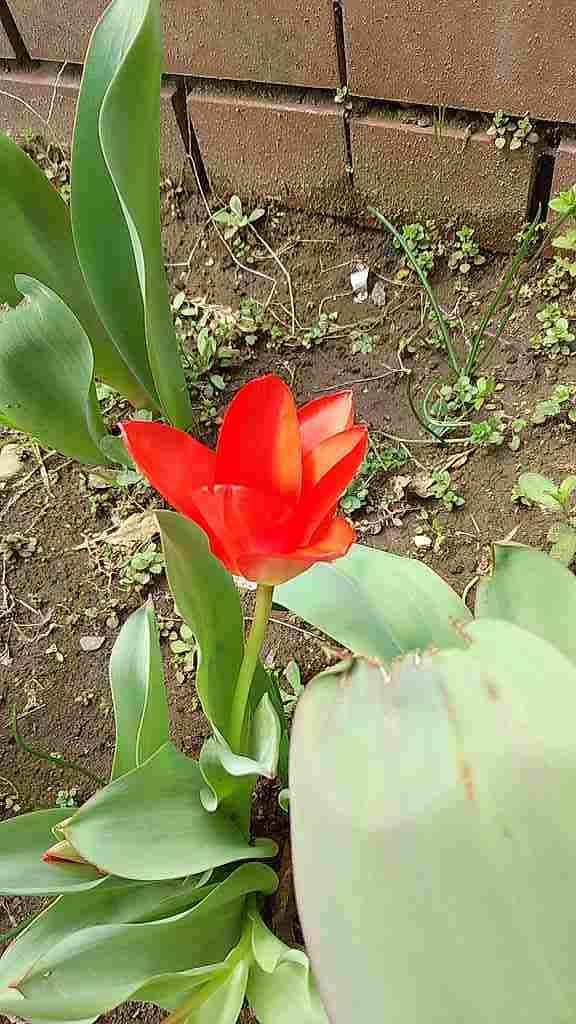 春が来る_d0338347_14212116.jpg