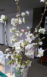 雪景色と桜_b0296353_19494446.jpg